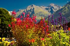 Flowers in Klosters (echumachenco) Tags: flowers mountain mountainside alps outdoor august summer house building chalet klosters grisons grischun grigioni graubünden switzerland schweiz suisse svizzera svizra suiza nikond3100