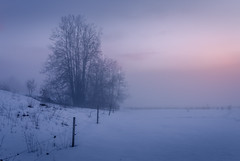 Whispers of winter spirits (nunoborges73) Tags: fog foggy mist norway sunset winter snow cold