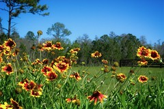Sunny Flowers (The Vintage Lens) Tags: flower flowers blue skies green nature flora stems beauty