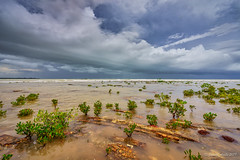 Darwin wet season - incoming tide (NettyA) Tags: 2016 australia darwin nt nightcliff northernterritory sonya7r clouds coastal incomingtide landscape mangroves rockplatform rocks sea seascape storm water wetseason