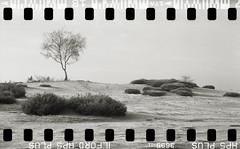 Bronica SQ-A-058-012 (michal kusz) Tags: pustynia kozłowska bronica sqa zenzanon 80mm ilford hp5 800 ilfosol 3 epson v600 medium monochrome monochromatic desert tree squere sand 135 35mm film frame heathers