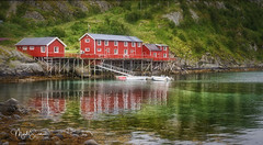 The red houses (marko.erman) Tags: lofoten norway nordland reine village fishermen sea mountains water clouds beautiful sony scenic idyllic nature outdoor outside travel popular quiet serenity drying flake pure transparency landscape nordic steep sunny montagne ciel paysage eau lac mer rorbuer houses red dwelling reflections