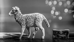 Draw a Sheep - 6564 (ΨᗩSᗰIᘉᗴ HᗴᘉS +50 000 000 thx) Tags: sheep draw dessin dessinemoiunmouton macro bokeh drawasheep pencil crayon bn nb noiretblanc blackandwhite monochrome fuji fujifilmgfx50s fujifilm belgium europa aaa namuroise look photo friends be yasminehens interest eu fr party greatphotographers lanamuroise flickering