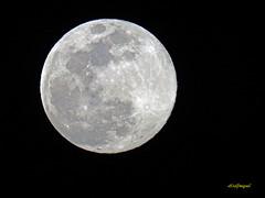LA LUNA HOY 20-03 -2019 (2) (eb3alfmiguel) Tags: astronomía luna llena