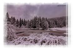 Lac, tourbière de Lispach - Vosges (jamesreed68) Tags: canon eos 600d lac lake tourbière vosges glace eau water snow neige france grandest winter ciel arbres sapins 88 forêt paysage nature