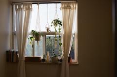 Hayley's old room (The_Last_Magnus) Tags: film analog analogue pentax 35mm 35mmfilm plants bedroom toronto