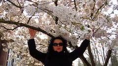 IMG_7948 (molaire2) Tags: printemps strasbourg orangerie fleur 2019 cigogne