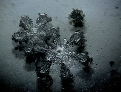 19Jan19B (peterobrien186) Tags: snow snowflakes snowcrystals crystal winter nature macro scattered light