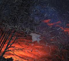 Rain, hugs and harmony (Robyn Hooz) Tags: pioggia puddle mirror specchio alba nuvole rami branches red rosso foglia leaf padova