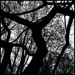outlines (luci_smid) Tags: tree branches silhouette impression outlines blackwhite