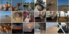 gokarnabeach4 (belight7) Tags: gokarna beach karnataka coast south india mosaic collage puppy crab coconuts camel shy kitten