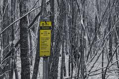 Cable in the forest. (MTRobot) Tags: forest cable nature landscape blackandwhite colourpop coloursplash