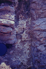 Weathering infil of fracture in weathered basalt, north of Capella, QLD, 03/11/01 (Russell Cumming) Tags: rock basalt dolomite capella clermont queensland