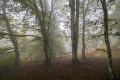 ALTUBE zarra 8 (juan luis olaeta) Tags: paisajes landscape forest bosque basoa pagoa hayedo fog foggy laiñoa nieblas photoshop fujifilmxpro1 lightroom natura altube araba
