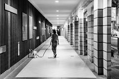 Walking dog (Thanathip Moolvong) Tags: singapore centralregion sg dog walking bw wb weekend relax monochrome nikon d750 zoom 2870mm f28