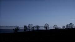 ...die blaue Stunde... (shallowcreek) Tags: österreich upperaustria hausruckviertel landschaft landscape farben colors blau blue baum tree feld field himmel sky