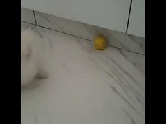 Dog Vs Lemon - Cute Dog (tipiboogor1984) Tags: awwstations aww cute cats dogs funny