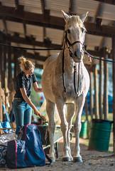 Tail brushing - 2019-03-02_51 (Paul and Nalva) Tags: nx500 sasmungnx500 equestrian samsungnx85mmf14 annalee2019