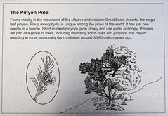 DAK_9282r (crobart) Tags: hidden valley hiking trail joshua tree national park california