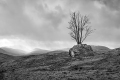 Rannoch Tree (Dom W Photography) Tags: rannochmoor scotland tree landscape
