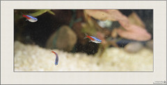 _mg_4865_1462755769_o (ursa_ursa) Tags: allrightsreserved autumnfall bulgariaбългария canoneos5d canonef28to200mmf35to56usm europe raworiginals sofiaсофия sofiahouse animals aquariums digitaloriginal fish geotagged