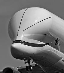 Grande taille / Large size (ricardo 31) Tags: aircraft avion airplane aeronautique blagnac noiretblanc spotter spotting toulouse blackandwhite planespotting lfbo aeroport airport plane tls monochrome airbus a330743 belugaxl beluga fwbxl