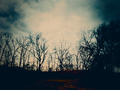 Fleeting Ghosts (Creepella Gruesome) Tags: iphone6splus hipstamatic road car window drive motion blur nature trees branches silhouettes sky clouds spooky eerie phantasm