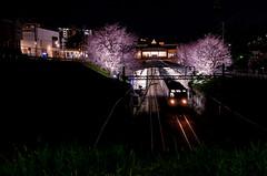 IMGP1354 (u2penguin) Tags: 横浜市 神奈川県 日本 jp sigma pentax k01 30mm