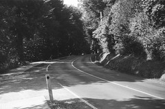 Mount Dandenong Tourist Road (9) (Matthew Paul Argall) Tags: spartus35fmodel400 35mmfilm kentmerepan100 100isofilm blackandwhite blackandwhitefilm 50mmlens road street mountdandenongtouristroad