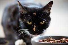 20190409-MRP00052 (Mark Ramelb Photography) Tags: kat katty boots