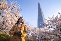 Asian lady travel and walking in cherry blossom park (anekphoto) Tags: cherry asian blossom sakura travel beautiful lifestyle park girl spring people korea happy beauty blooming lady flower garden person woman tourist chinese vacation outdoor young nature festival fun photographer happiness women tourism asia photo holiday colorful relax south seoul camera bag thai japanese korean jamsil tower smile walk
