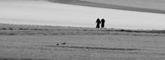 two birds (Wackelaugen) Tags: two people silhouette birds canon eos photo photography stephan wackelaugen black white bw blackwhite blackandwhite mono noiretblanc schwarz weis schwarzweis
