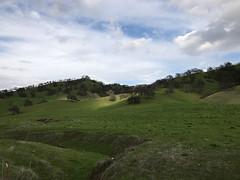 Lewis's Woodpecker Site - Napa County, California, USA - February 7, 2019 (mango verde) Tags: lewisswoodpecker melanerpeslewis napacounty california usa mangoverde