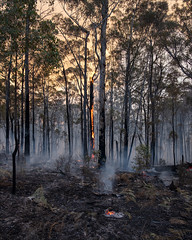 nowa-nowa-3595-ps-w (pw-pix) Tags: fire bushfire burning flames embers trees logs ash sticks dirt black grey orange yellow green controlledburn fuelreductionburn turnedintoabushfire smoke smokey haze hazy afternoon lateafternoon nearbruthennowanowaroad nearbruthenbuchanroad kennyroad prettysally nowanowa eastgippsland gippsland easternvictoria victoria australia peterwilliams pwpix wwwpwpixstudio pwpixstudio