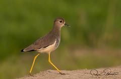 _USM4684ss (TARIQ HAMEED SULEMANI) Tags: sulemani tariq tourism trekking tariqhameedsulemani winter wildlife wild birds nature nikon