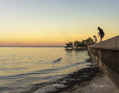 A Child's Dream (SteveFrazierPhotography.com) Tags: poncedeleonhistoricalpark puntagorda charlotteharbor charlottecounty florida fl waterscape seawall beach sand seaweed kelp waves water brushes trees mother mom child girl porpoise dolphin flock bird seagull sunset twighlight dusk evening beauitful peaceful scene scenery landscape stevefrazierphotography canoneos60d composite photomanipulation photoshop magical enchanting fantasy surrealism surreal fineart digitalmanipulation art collage retouching