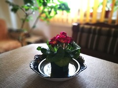 Just a simple beauty (Baubec Izzet) Tags: baubecizzet flowers bokeh light huaweip9