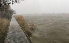 Tempête de neige au Scamandre 23 janvier 2019 - IMG_5817 (6franc6) Tags: réserve scamandre janvier 2019 occitanie languedoc gard 30 petitecamargue hiver 6franc6