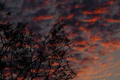 Sunset at the Park (jeremy_d_smith) Tags: fuji fujinon fujifilm fujixseries xseries xt1 xf90mm taiwan kaohsiung sunset nofilter dogwood week6