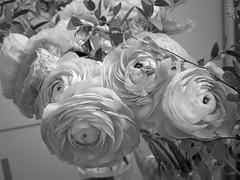 harada-flowers-71 (annie harada) Tags: flowers hana blumen fleurs bouquet noir et blanc black white