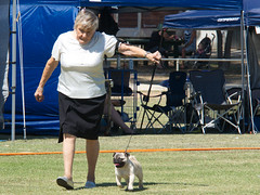 Cohuna dog show (6) (Boobook48) Tags: australia dogshow cohuna victoria