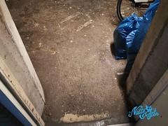 Waterschade 32 - Natte Kater Calamiteiten Diensten (Natte Kater) Tags: waterschade overstroming storm noodweer regen overspoeling water garage schoonmaak schoonmaken natte kater nat lekkage calamiteit calamiteiten diensten 24uur wateroverlast nood calamiteitendienst herstellen ontgeuren desinfecteren regenwater riolering riool rioolwater afvalwater
