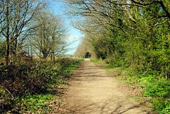 On the path to Riddlesdown (zawtowers) Tags: london loop section 5 five hamseygreentocoulsdonsouth walk amble stroll walking exploring outer suburbs green spaces sunday 24th march 2019 warm dry sunny afternoon blue skies sunshine path bridleway horses dog walkers quiet calm peaceful serene