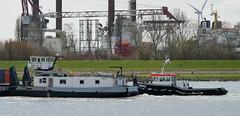 FAIRPLAY-31 , GREENBARGE 3 , GEPKE & THYRA (kees torn) Tags: thyra tug gepke greenbarge3 fairplay31 offshore saipam gws ahts duwboot hetscheur maassluis