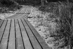 Vineyard Board Walk (uselessbay) Tags: 2016 beach billtalley edgartown landscape marthasvineyard massachusetts nikon nikond700 places uselessbayphotography williamtalley beachpresetdxo blackandwhite d700 digital fullframe uselessbay places|beach unitedstates usa