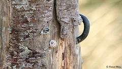 Fences (patrick_milan) Tags: wood fence barrière bois dune saint pabu
