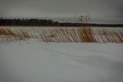 IMG_9054_edit (SPihtelev) Tags: ладога ленинградская область озеро зима лед льды вода маяк