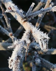 A frosty morning (kitmasterbloke) Tags: cold frost icecrystals winter essex nature plants pattern geometric symmetry ground landscape outdoor uk morning temperature sunlight sunny