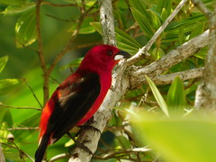 Red 3 (moarastaeblein) Tags: bertioga sp brazil