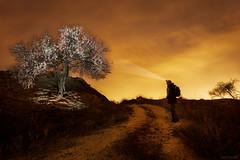Almendro-at-night. (invesado) Tags: almendro noche lightpainting linternas nikon d750 20mm